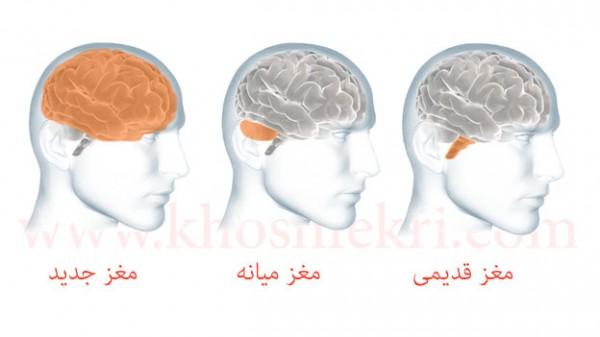 دانشمندان دریافته اند که مغز انسان از 3 بخش مستقل ولی به هم پیوسته تشکیل شده است.